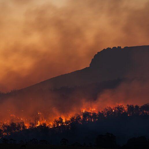 Φωτιές: Πώς μπορούμε να βοηθήσουμε;